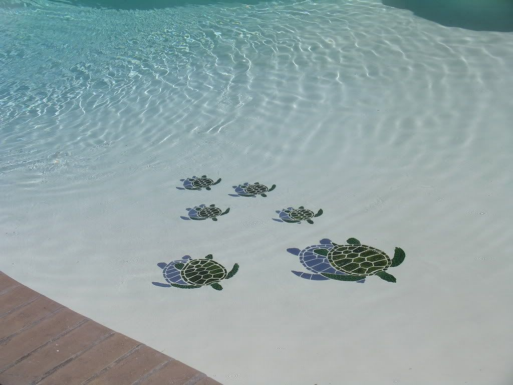 Decorative Pool Tile Prepossessing Every Pool Needs A Family Of Sea Turtles If I Ever Have A Pool I Design Decoration