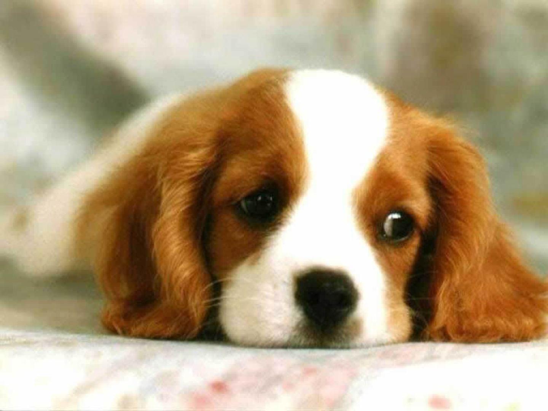 Xsadpuppywallpapernormalg i love dogs