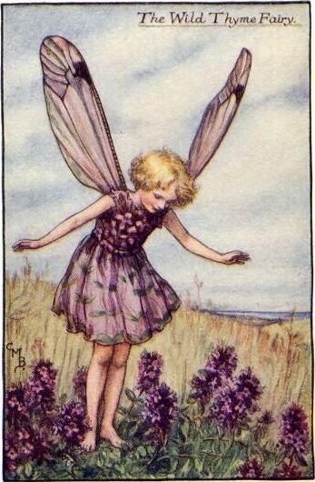 Wild Thyme fairy.