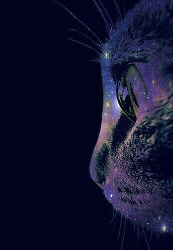 Spacekitty Catwallpaper Space Cat Trippy Background Galaxy