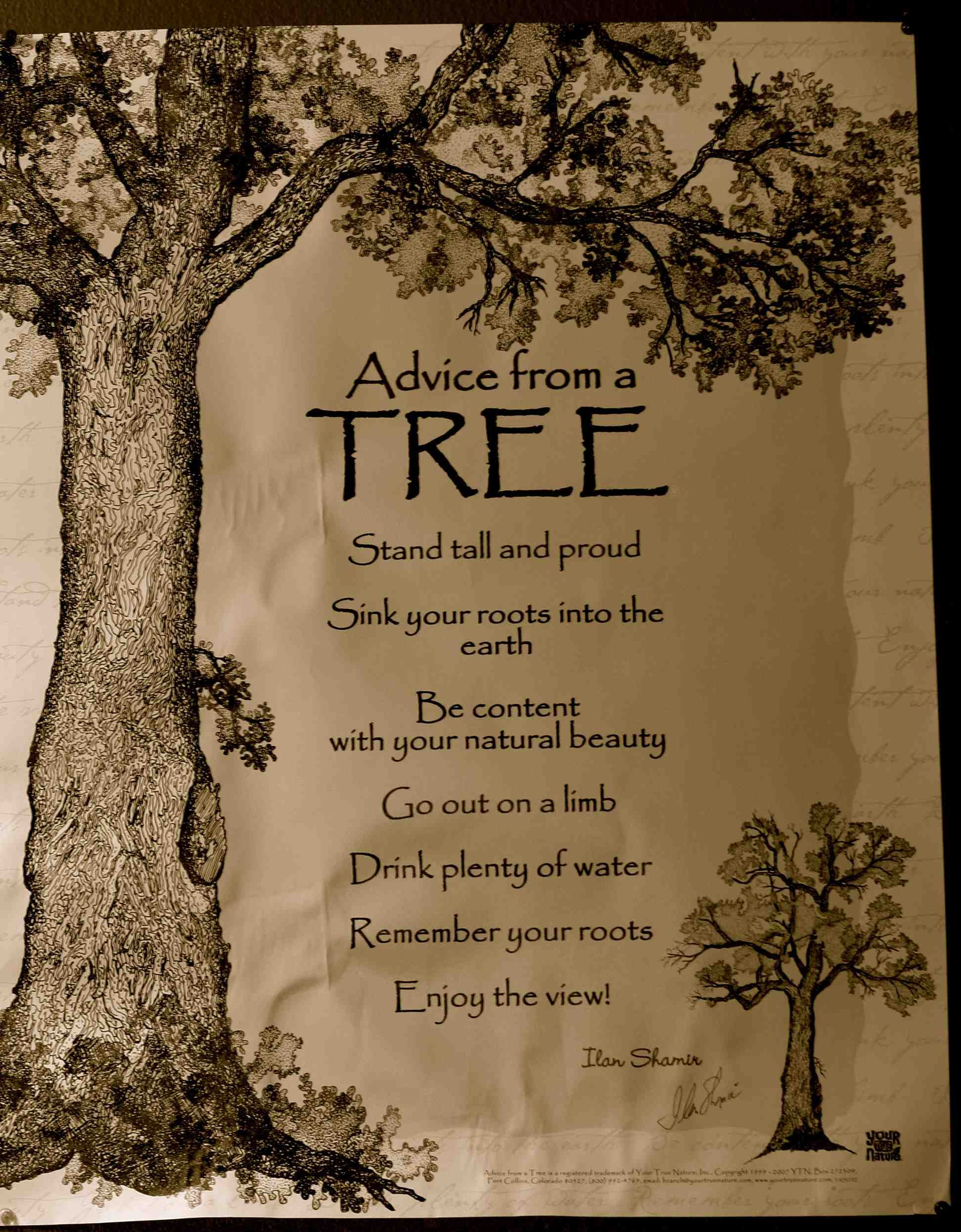 Tree Of Life Quotes : quotes, Advice, Quotes,, Words,, Nature, Quotes