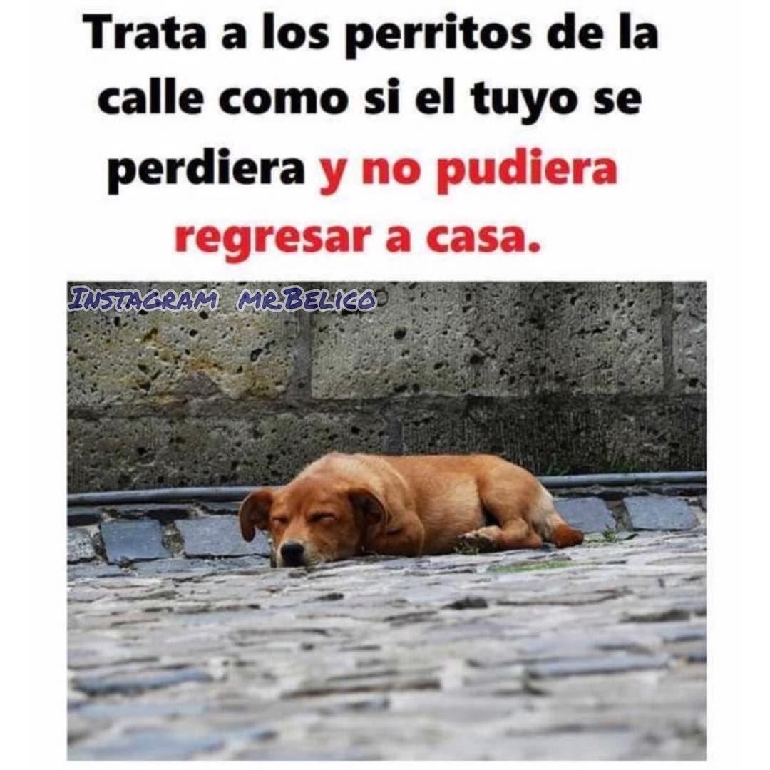 Pin De Maristati En Perritos Cuidar Animales Animales Frases Perros Tristes