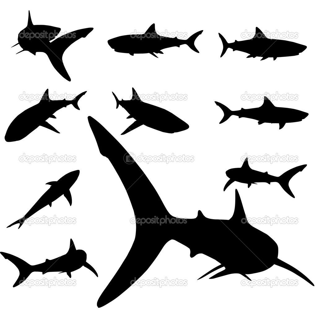 ce7d8fc8ed0c9 shark silhouette from below | Shark Royalty Free Photography Hammerhead  With Hand Images