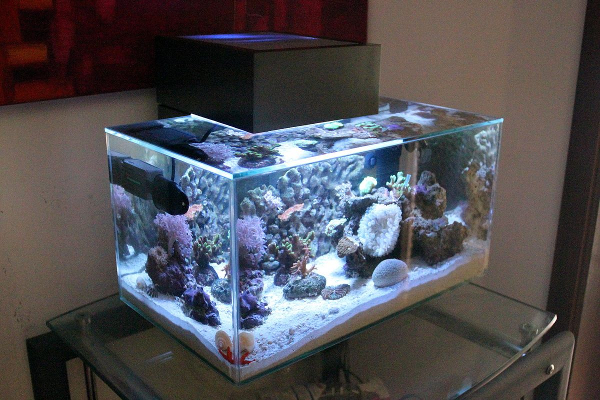 Fluval edge nano reef nano reef aquariums pinterest for Fluval fish tank