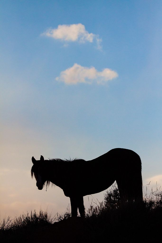A wild stallion silhouetted at sunset. Theodore Roosevelt National Park, North Dakota.