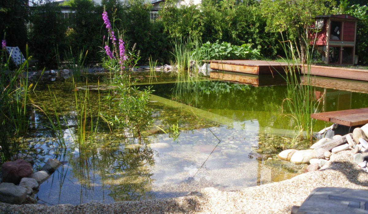 schwimmteich in berlin in 2018   schimmteiche im garten   pinterest