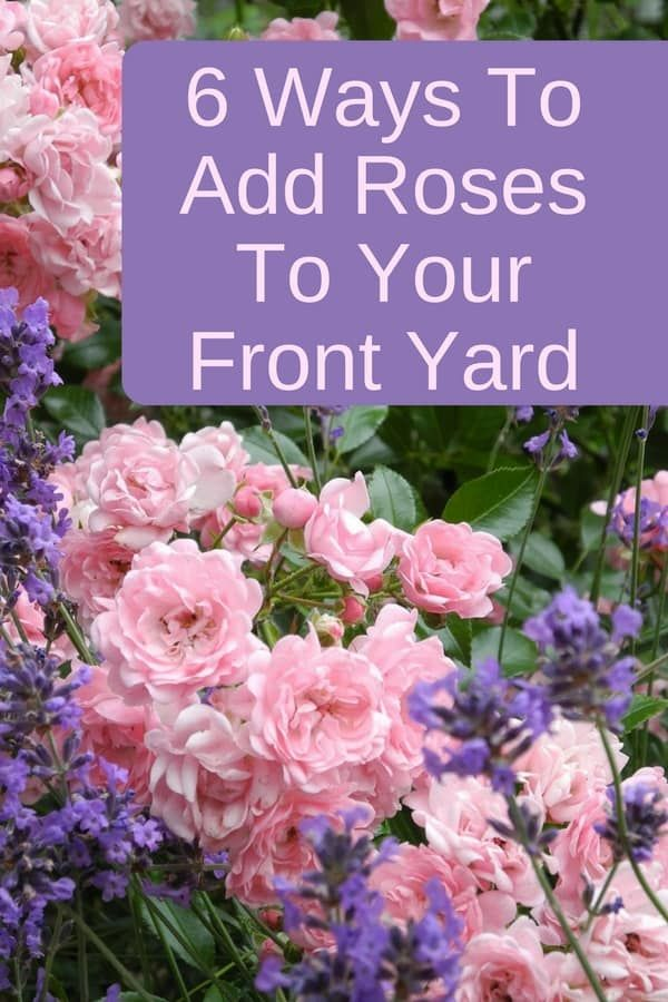 How To Create An AMAZING Front Yard Rose Garden | Roses garden ...