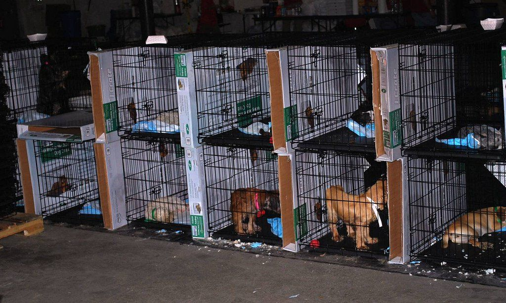 Ohio Takes New Steps To Stop Puppy Mill Cruelty Sick Pets Puppy Mills Puppies