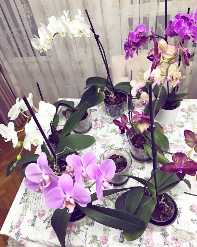 Orkide bakımı Bahçe