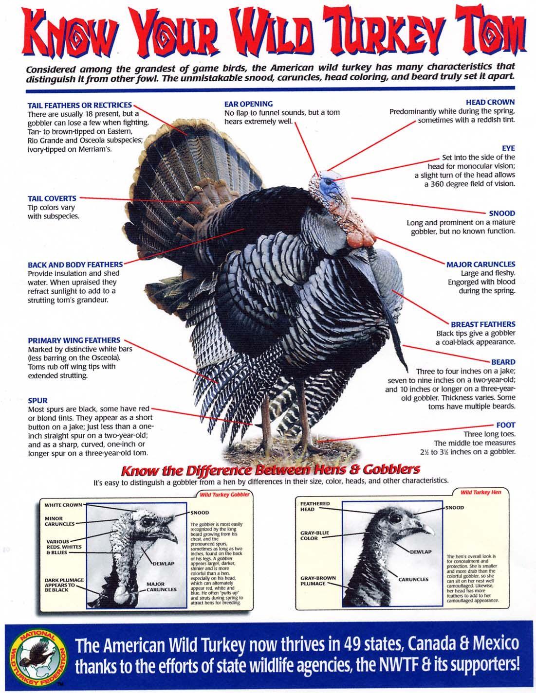 small resolution of turkey parts quiz static turkey parts answers interactive nwtf turkey wild turkey