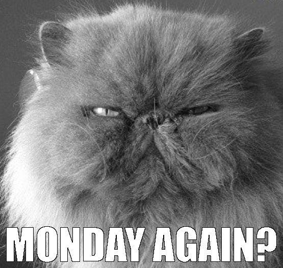 04c0bb3f869fbc0f26d60896a8b4c6b8 monday cat i am a official crazy cat lady pinterest monday