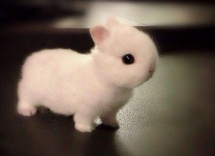 25+ best ideas about Tiny baby animals on Pinterest | Adorable ...
