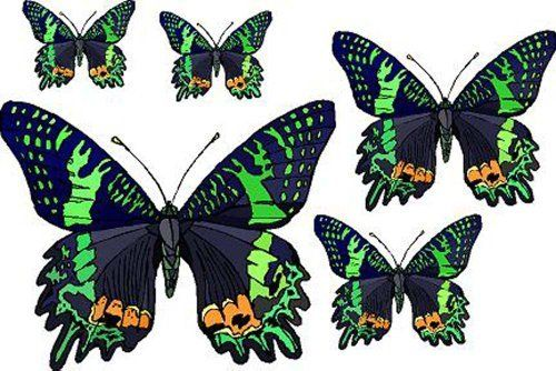Set of 5 Black Butterflies with Green & Orange - Vinyl Stained Glass Film, Static Cling Window Decal by Window Art in Vinyl Etchings. Save 41 Off!. $2.95. Simple to remove, the vinyl decals can be easily reapplied without the loss of static cling.. Many standard sizes are available. Custom sizes available upon request.. Advanced UV protection insures material will not discolor or damage glass.. Vinyl decal material and ink are safe for outdoor or indoor use.. Clear static-cling vinyl dec...