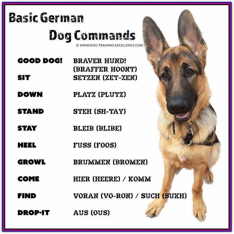 Photo of Obedience Dog Training With A Few Key Tips – Dog Training Ti