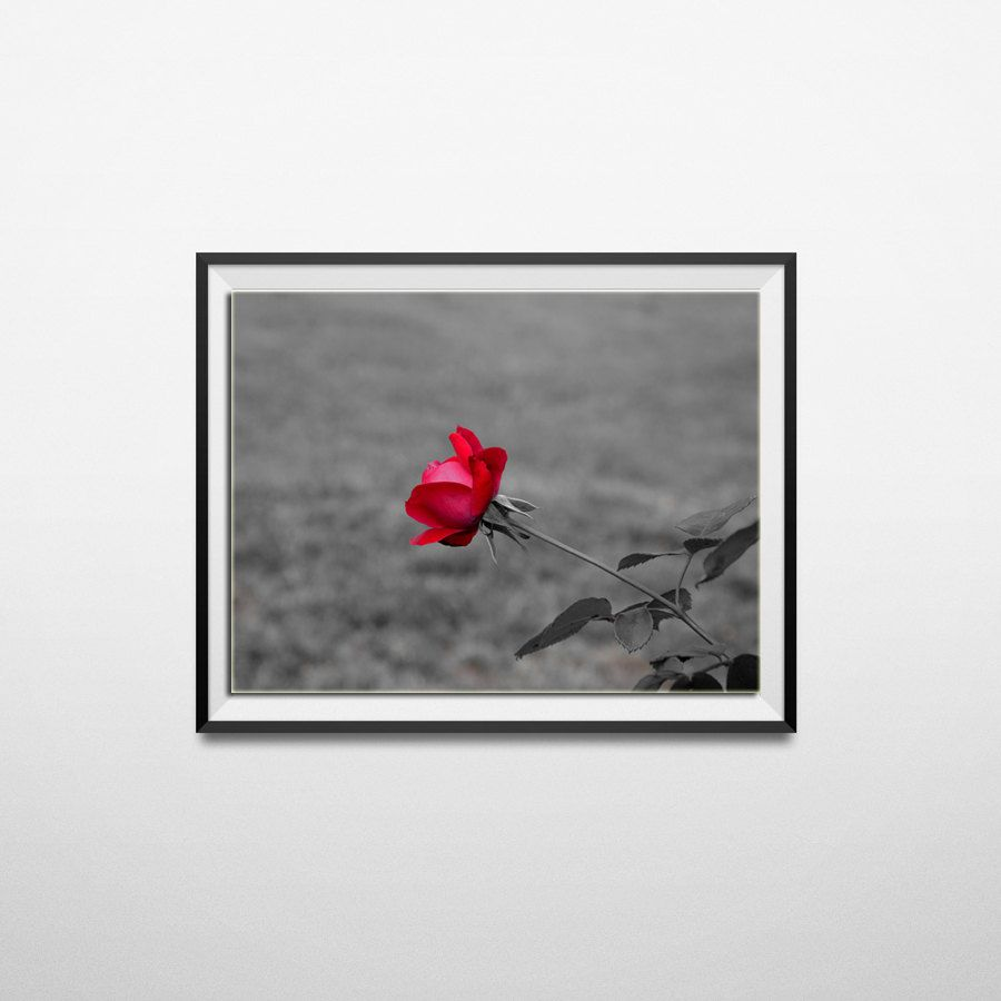 Red rose photographyred home decor red wall art nature