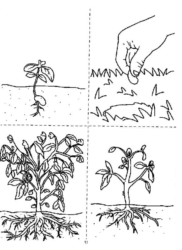 How Does A Growing Plants Coloring Page Tree Coloring Page Sunflower Coloring Pages Flower Coloring Pages