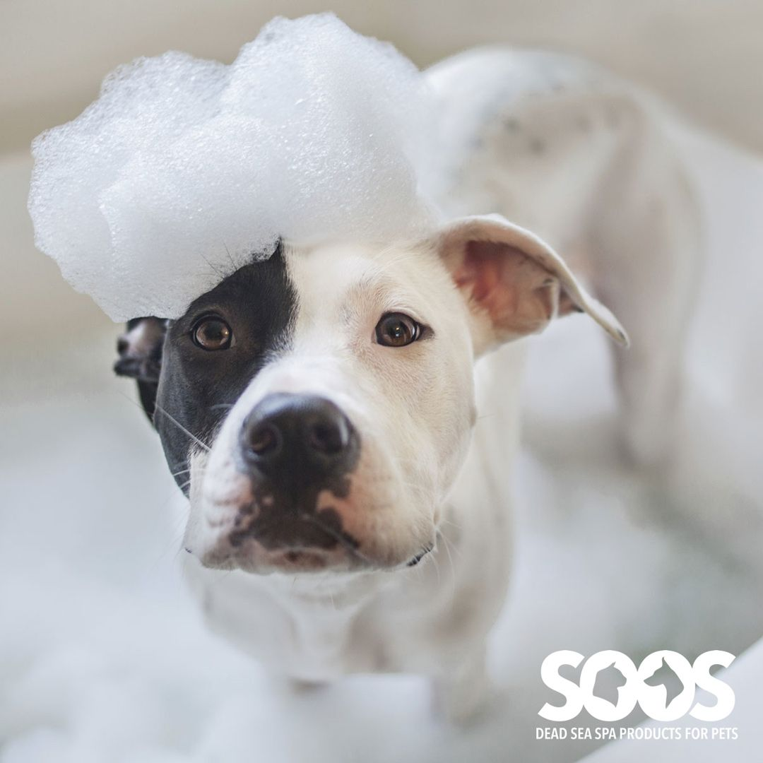 Dead Sea Salt Benefits For Pets Dog Shampoo Dog Wash Natural