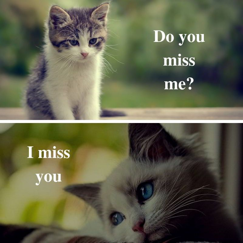 Missing Cats Memes Cute Miss You Do You Miss Me I Miss You Wallpaper