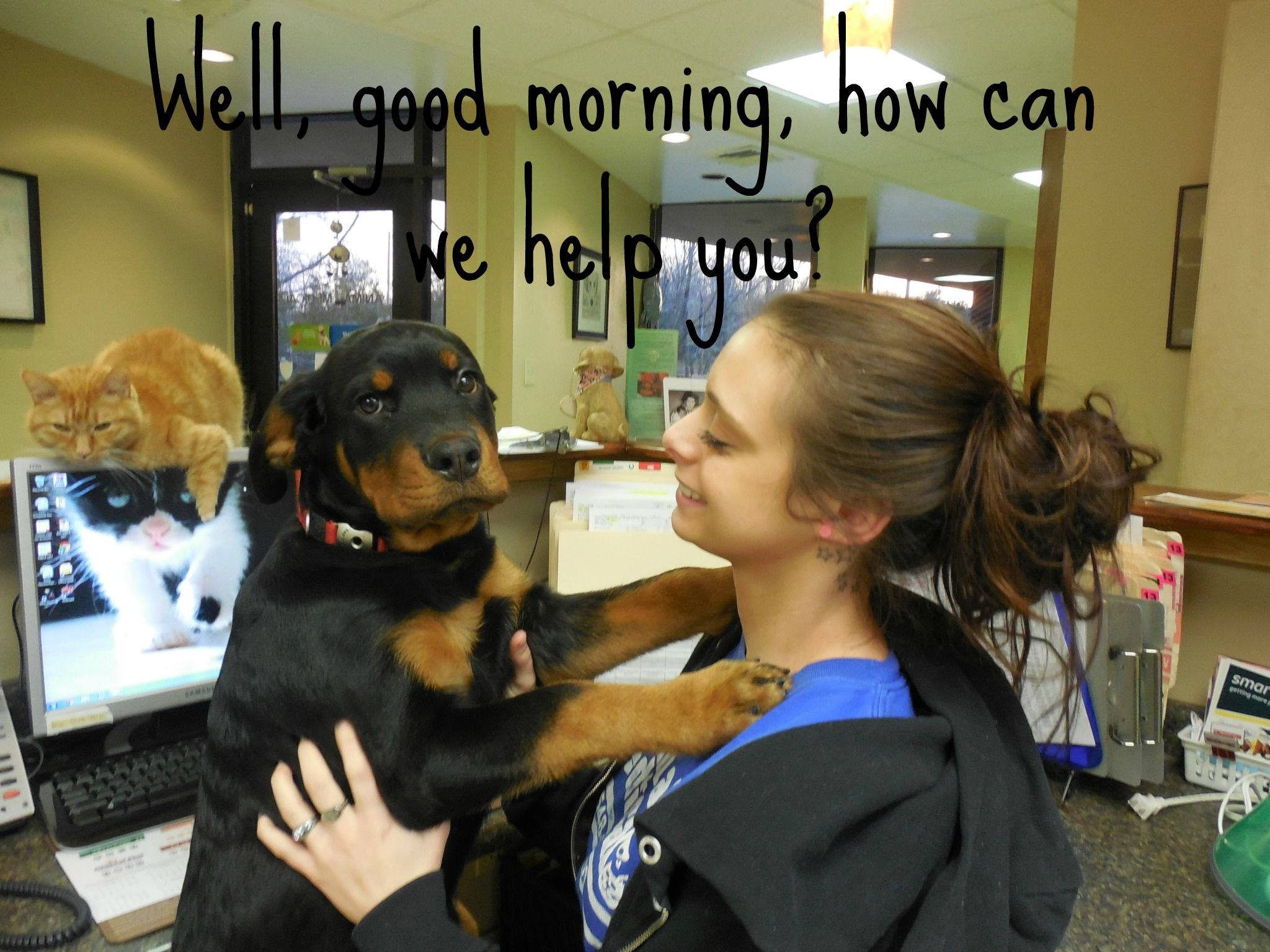 How can we help you pet health care medical