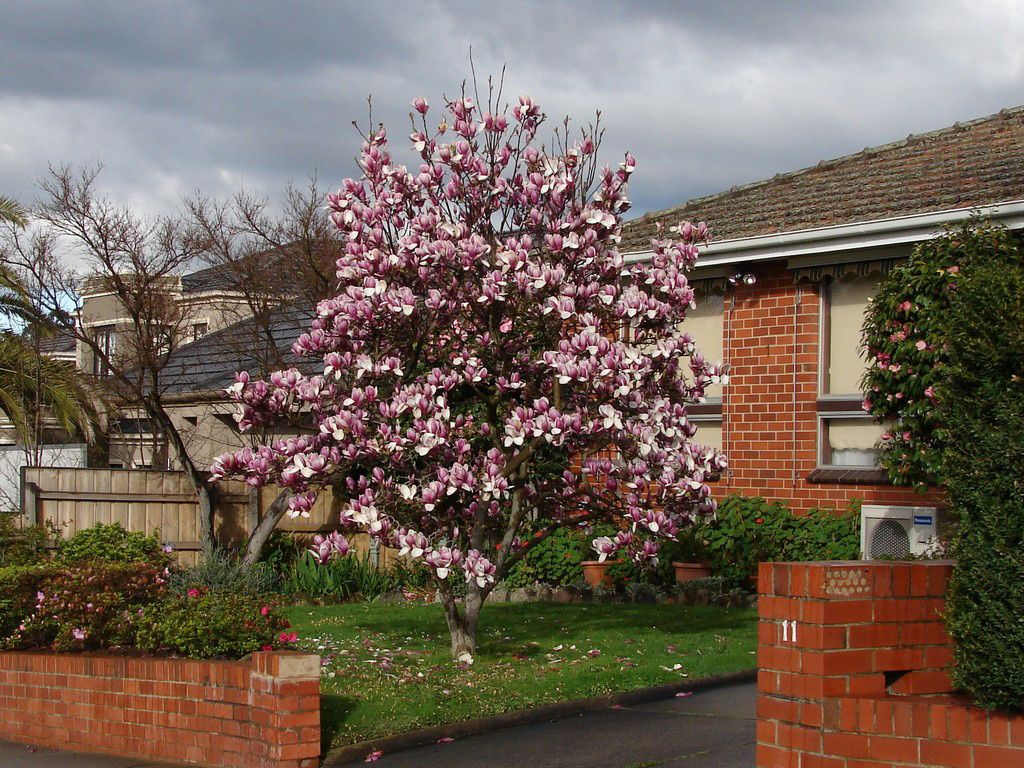 Best Trees To Grow Curb Appeal Landscape Trees To Plant