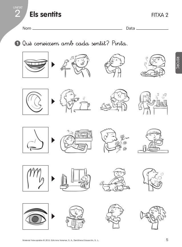 Els Sentits Primero Primaria Cerca Amb Google Los Cinco Sentidos En Preescolar Los Sentidos Para Niños Organos De Los Sentidos