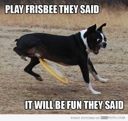 04c4317774c4038c2263c415b0ac23fc dog getting hit with frisbee meme fail { dog funny } pinterest