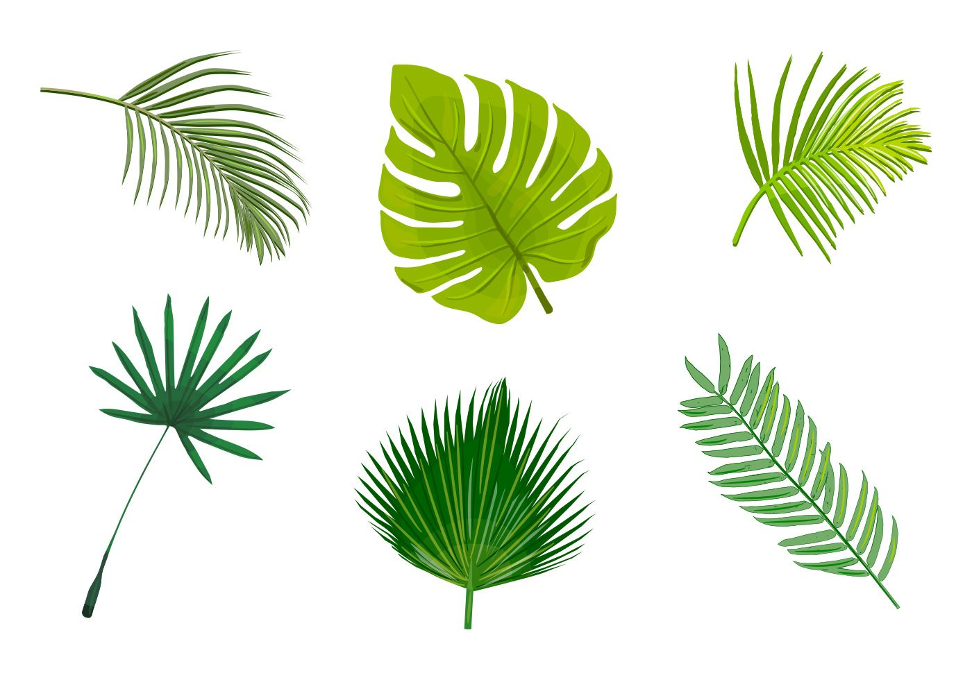 Palm Leaf Different Types In Color Tatts Leaves Vector Palm Tree Leaves Leaves Doodle All tropical rain forests resemble one another in some ways. pinterest