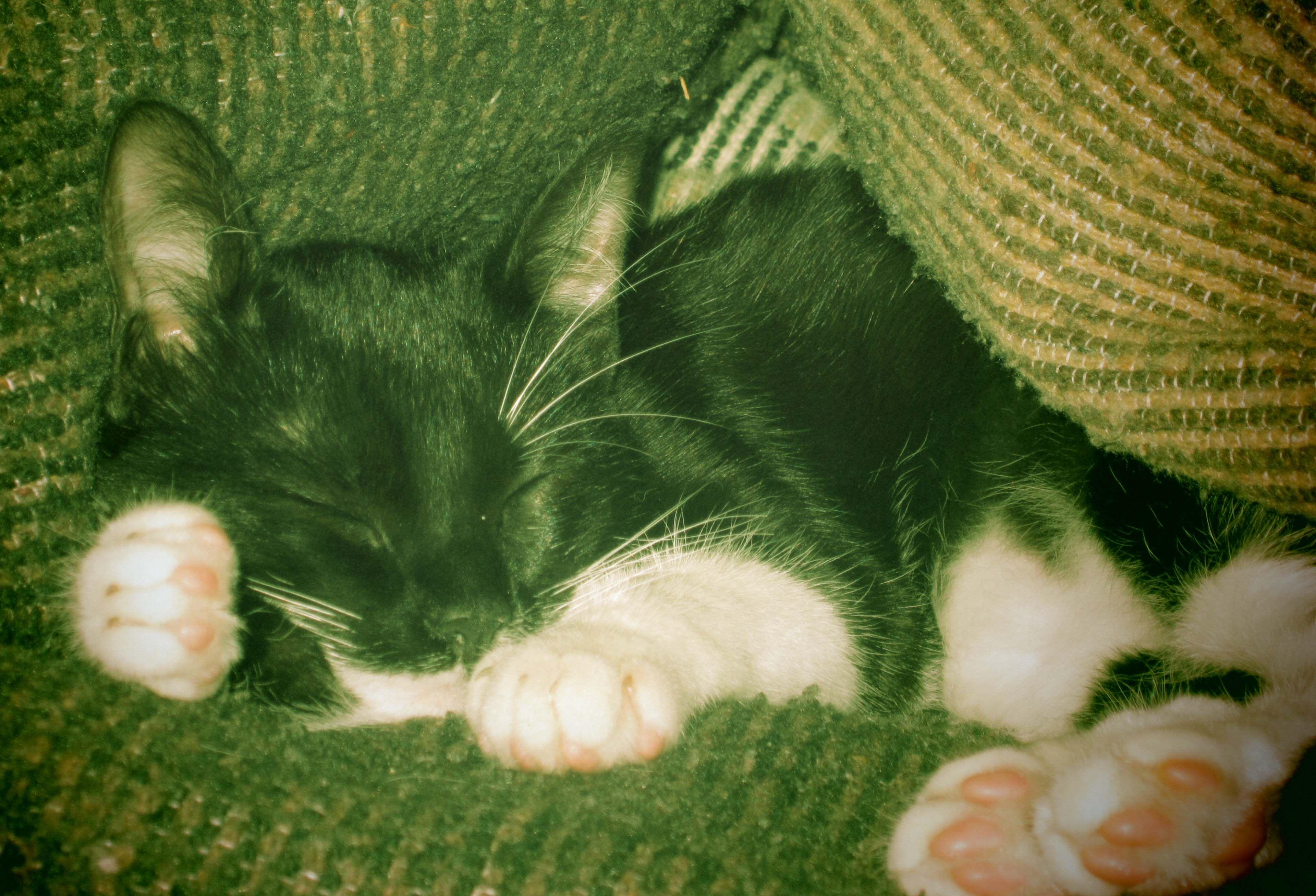Magia como siempre durmiendo.