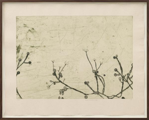 Prints – Tags – Cathrine Raben Davidsen