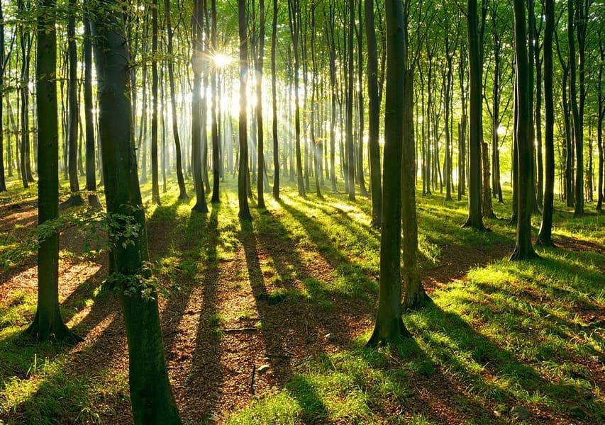 Der Wald In Den Jahren Zwischen 2010 Und 2015 Haben Wir