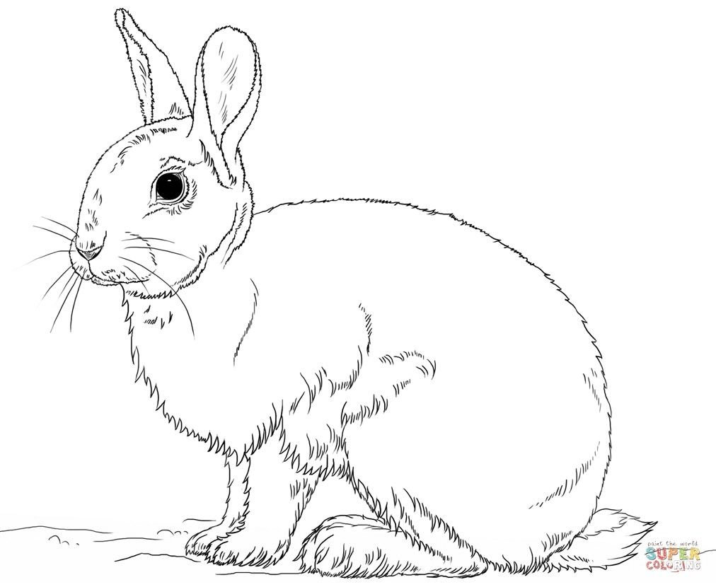 Brer Bear By Henrieke On Deviantart Bear Coloring Pages Rabbit Colors Coloring Pages
