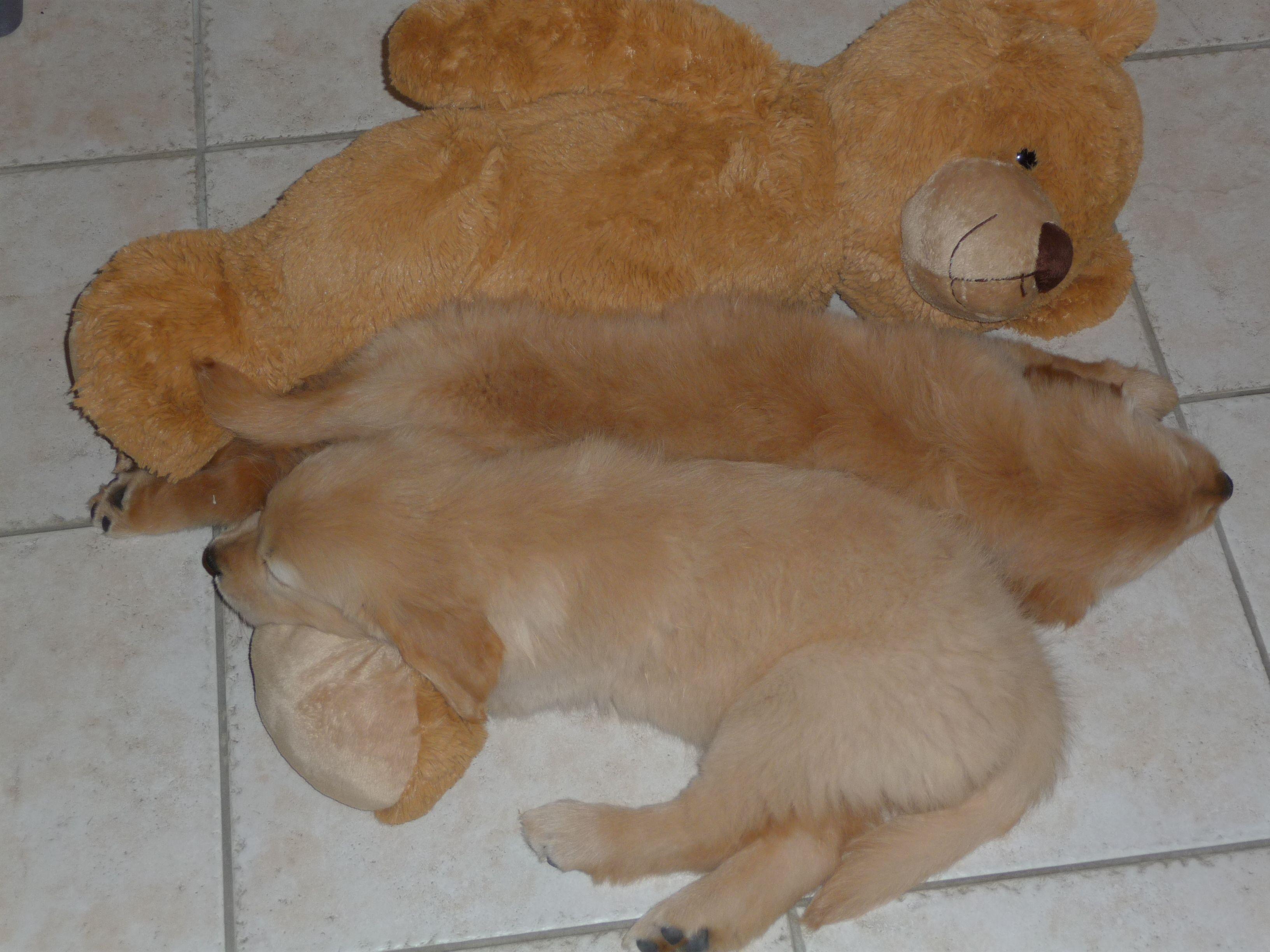 Teddy time girls, Teddy,