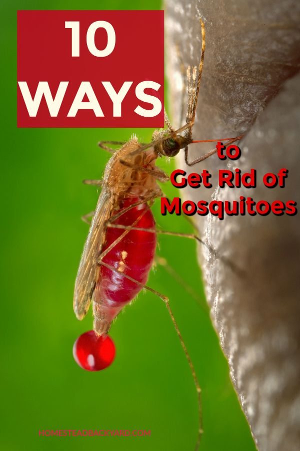 10 Ways to Get Rid of Mosquitoes Pests Pinterest Gardens