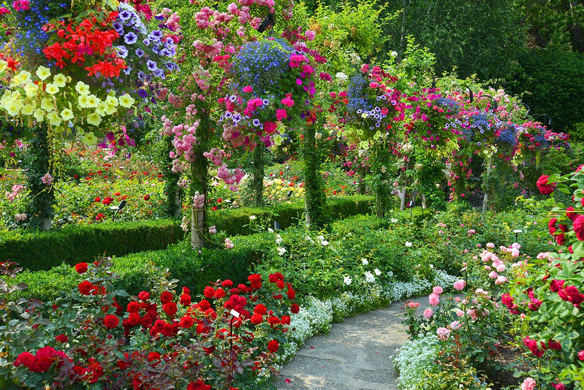 04c57bc055661a0588be59e942086324 - Famous Rose Gardens In The World