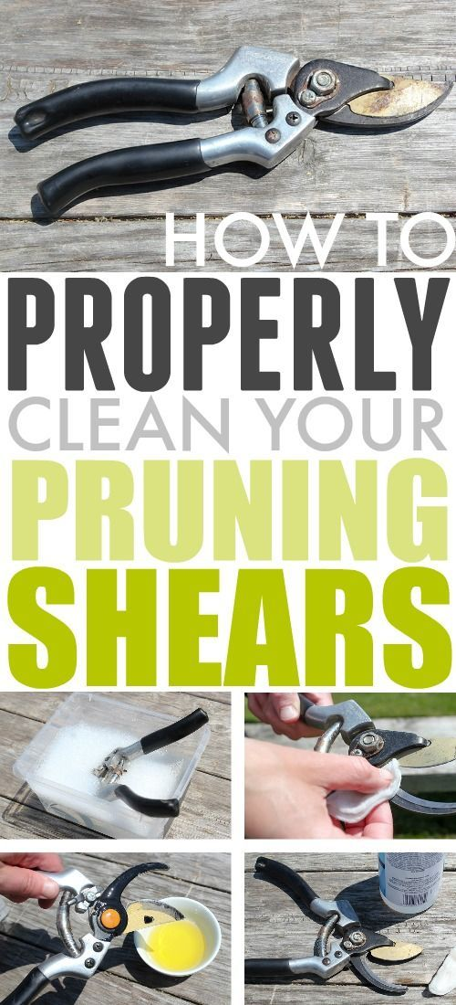 How to Clean Pruning Shears | The Creek Line House