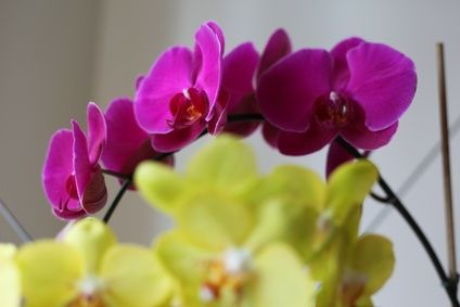Plants That Don T Need Soil But Stones Water Growing Orchids Orchids Orchid Plants
