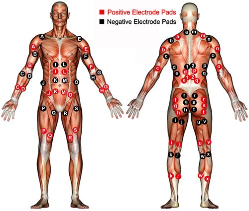 Ems  Electrode Placement Chart Bodybuilding  Google Search