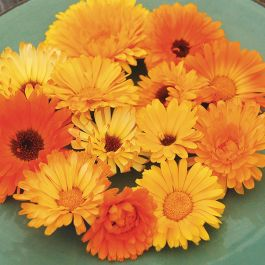 Pacific Beauty Calendula in 2020 (With images) Organic