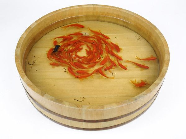 Real #Goldfish or #Painting? #art #Japanese