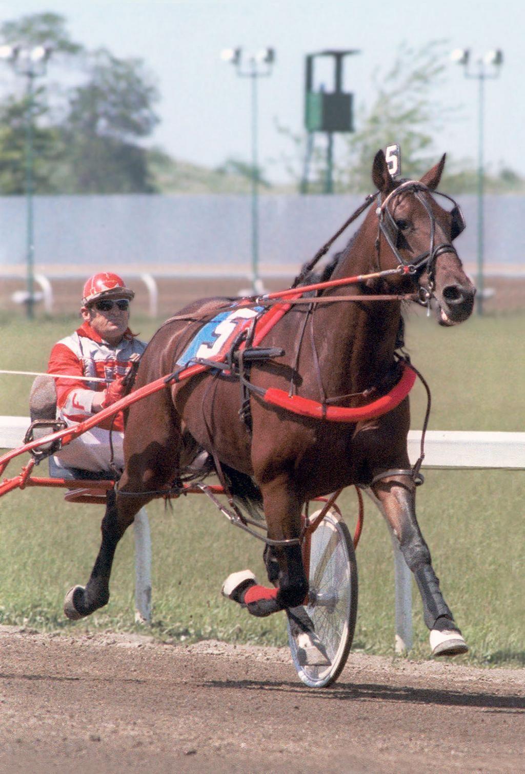 U.S. Trotting Assn. on Animals, Horses, Harness racing