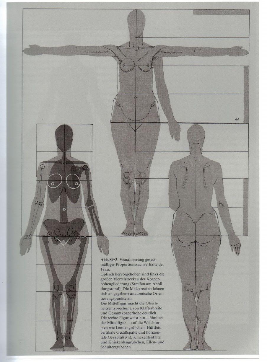 Gottfried Bammes   Die Gestalt Des Menschen   Anatomy & Visual ...