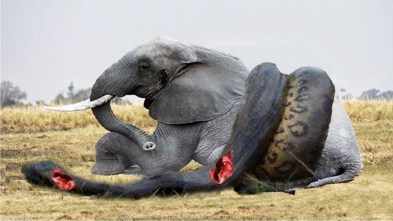 عالم الحيوان الحياة البرية الهجوم الجزء 1null https