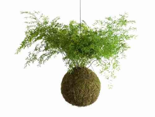 Art floral japonais Kokedama  idées de pots de plante naturels - mini jardin japonais d interieur