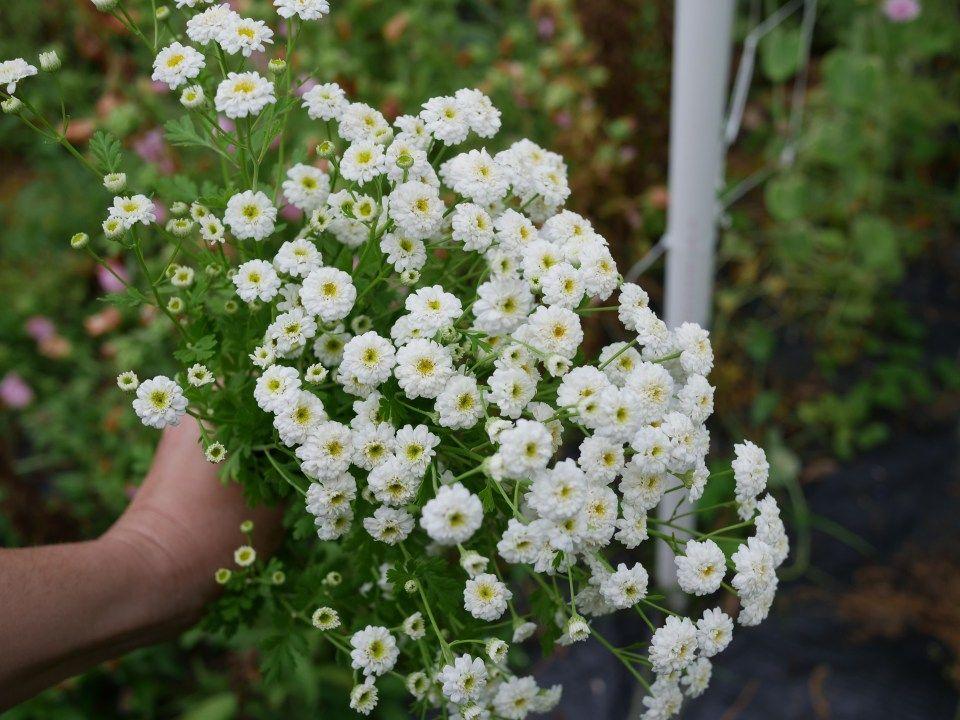 Pin On Fresh Cut Bouquets