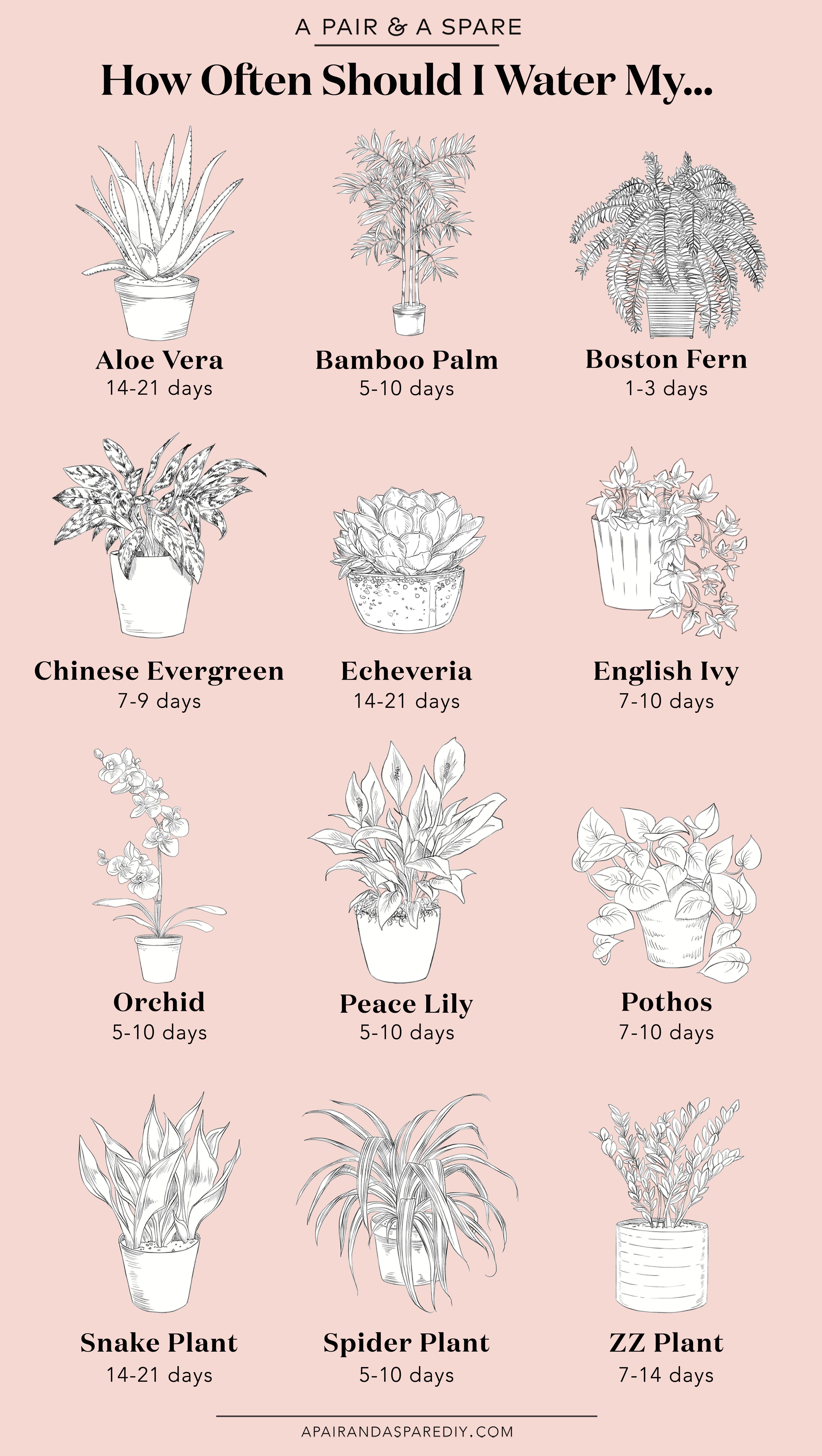 How Often Should I Water My Plants? (a pair & a spare) -   11 planting Decoration succulents ideas
