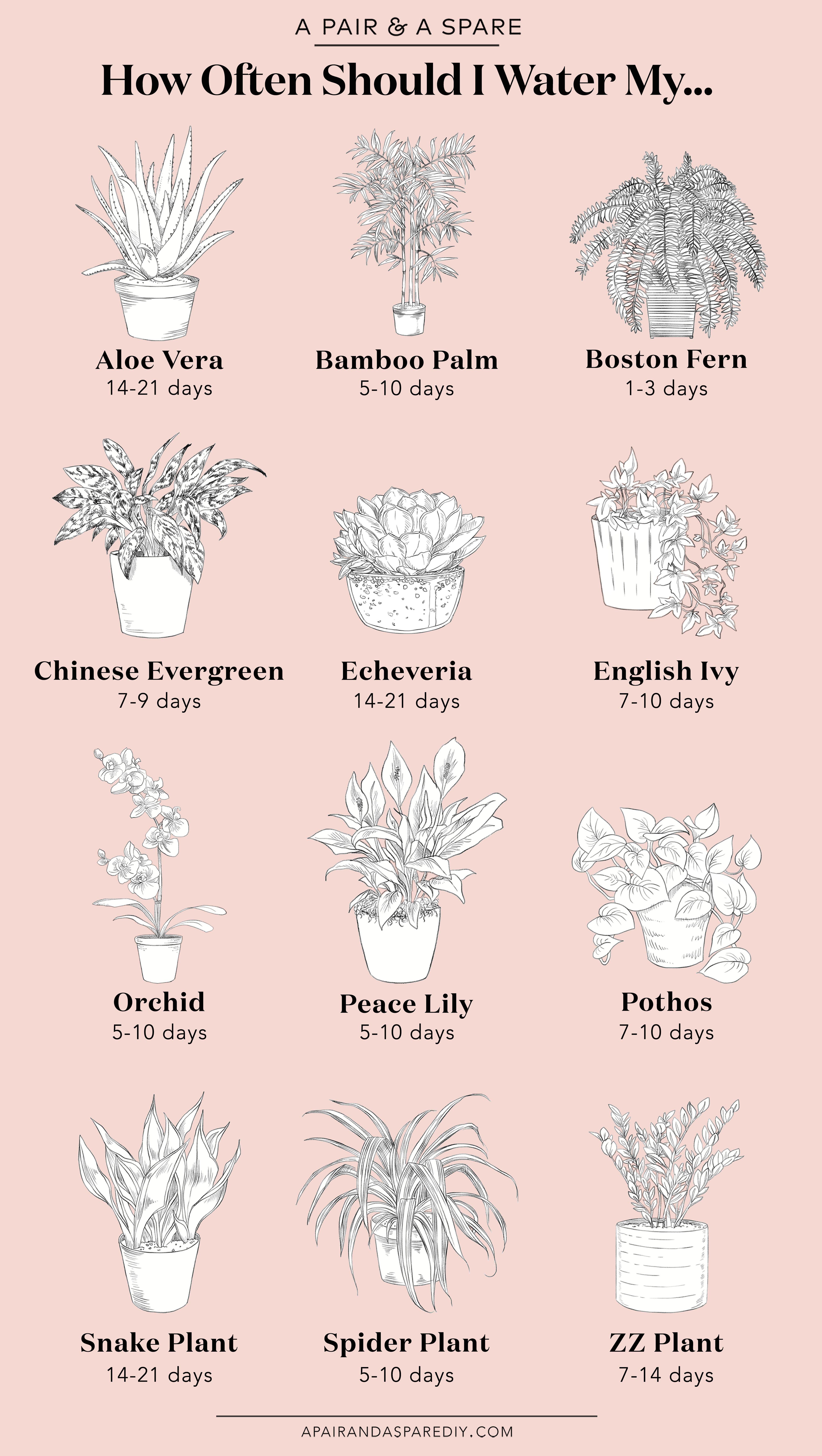 11 planting Decoration succulents ideas