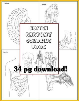 Human Anatomy Coloring Book For Any Study Of The Body And Its Systems From 1 2 3 Creations By L Ackert On TeachersNotebook
