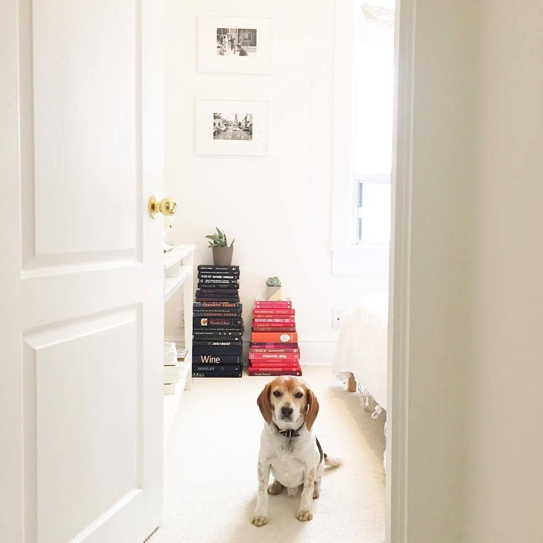 Innenfarbe im haus inside meghan markleus lovely toronto home her modern bright