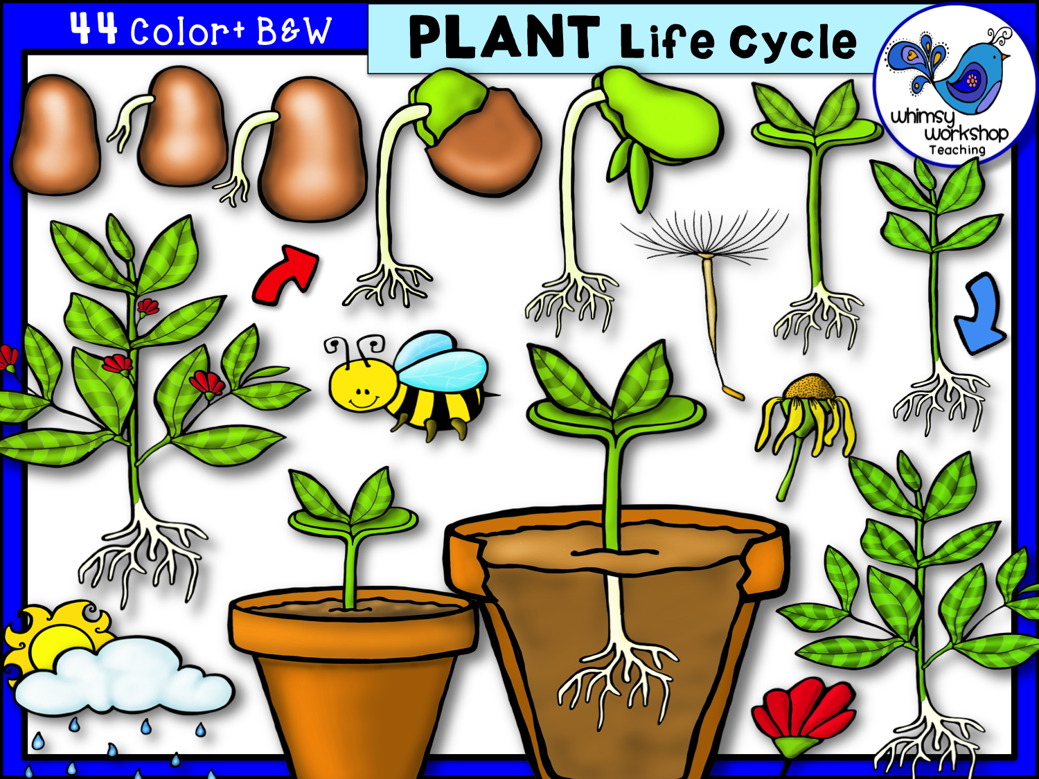 Whimsy Workshop Teaching Teacher Graphics Plant Life Cycle Life Cycles Clip Art [ 1125 x 1500 Pixel ]