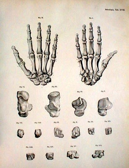 Iu 416541 Bones Pinterest Anatomy Drawings And Hand Anatomy